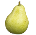 Indian Green Pear